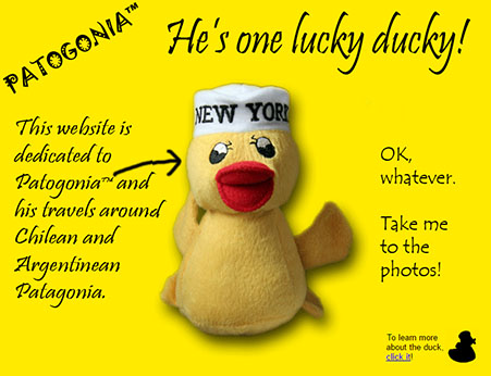 Patogonia - he's one lucky duck